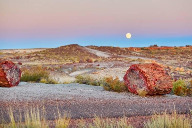Petrified forest national park near Arizona