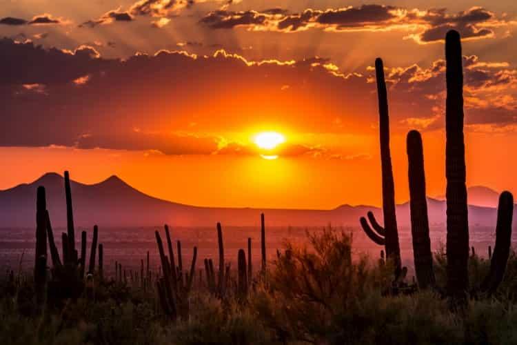 The sunset in the Sonoran Desert of Arizona