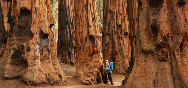 a mother and her child stand at the base of a huge sequoia tree