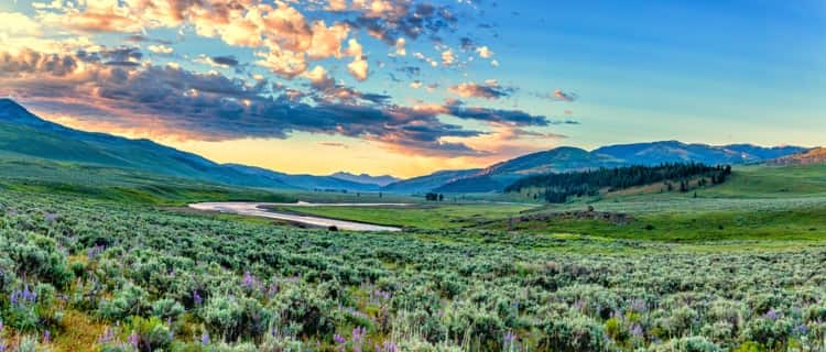 Lamar Valley at Yellowstone National Park
