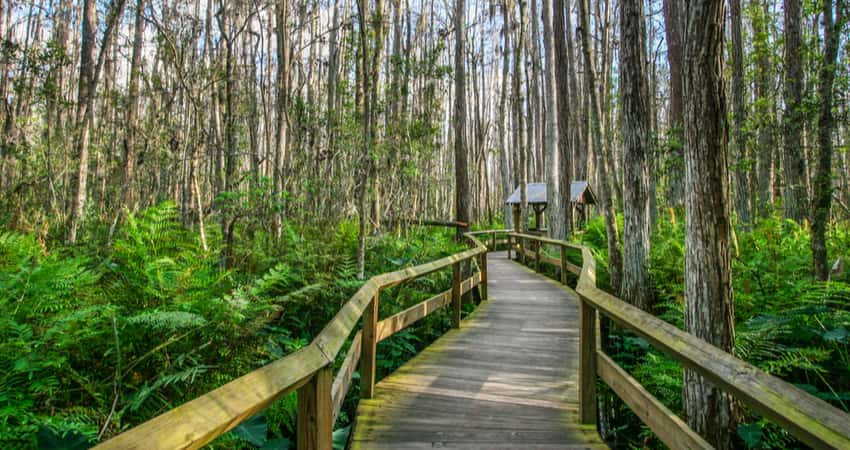 A wooden deck trail in Everglades National Park
