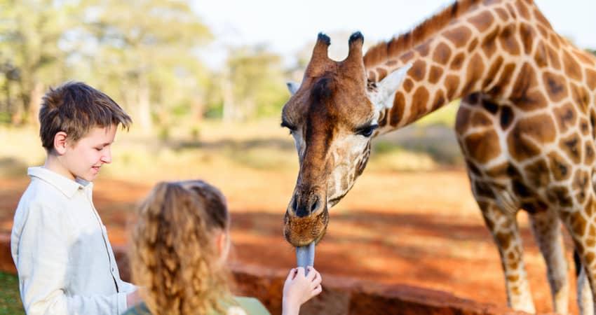 Two children feeding a giraffe at a wildlife center