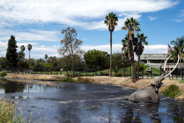 an elephant cools off in the water at the los angeles zoo