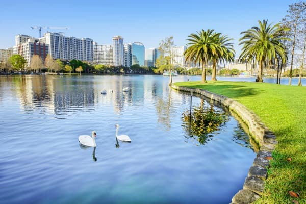 ducks swim in the water at lake eola park