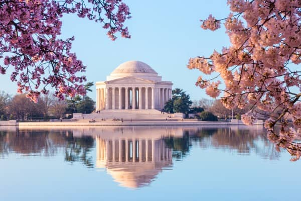Cherry blossoms blooming around the Tidal Basin in Washington DC.