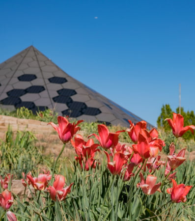 Flowers in front of pyramid at Denver Botanic Garden