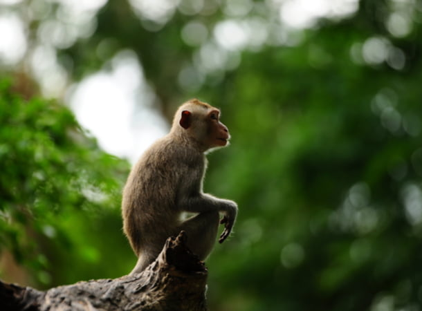 A monkey lounging in a tree at the San Antonio Zoo
