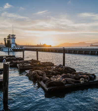 Seals basking near the water at Pier 39