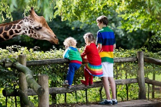 Three children observe a giraffe in a zoo