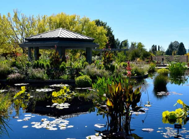 A gazebo on the edge of a pond in the Denver Botanic Gardens