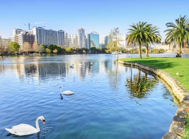 Swans swim near the shore of Lake Eola, with the Orlando skyline visible in the background