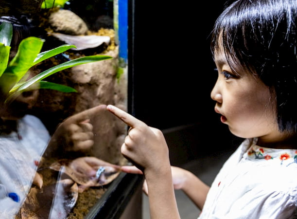 A little girl explores the reptile house