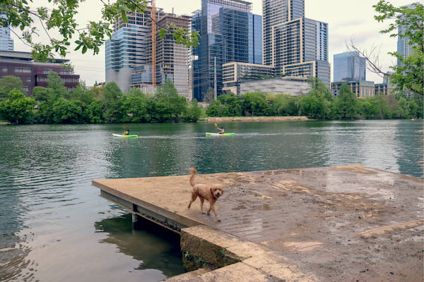 A dog by Barton Creek in Zilker Metropolitan Park