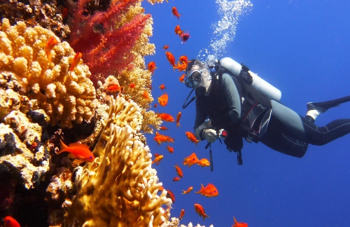 diver-in-coral-reef