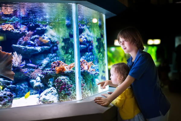 two children observe a fish tank in the New England Aquarium