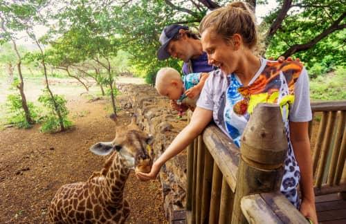 a family feeds a giraffe at the Denver Zoo