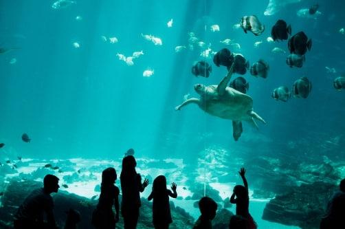 a large tank at the georgia aquarium with fish and a sea turtle