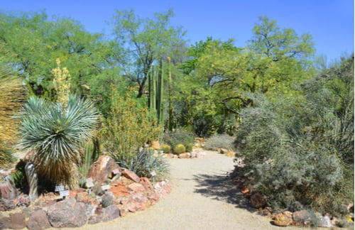 A walkway in the Phoenix Desert Botanical Garden