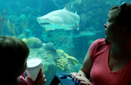 mother and child watch as fish and sharks swim in a Florida Aquarium exhibit