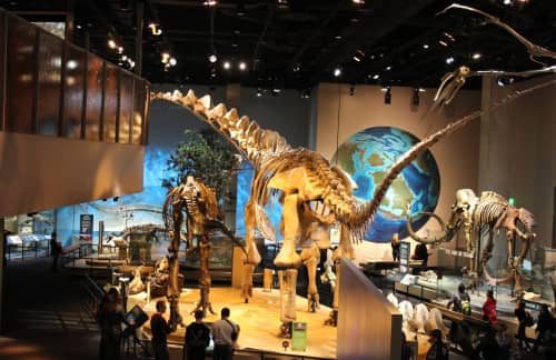A dinosaur exhibit at the Perot Museum