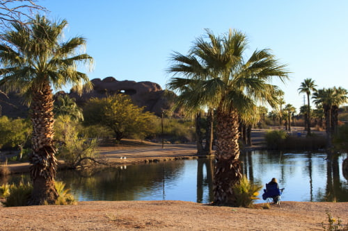 a view of a pond at the phoenix zoo