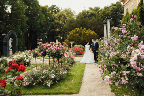 wedding couple in a rose garden