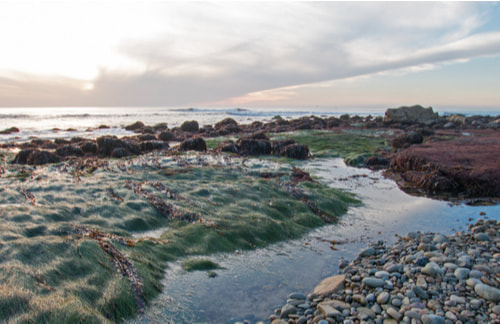 point loma tide pools during low tide