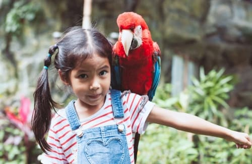 a girl looks at the camera with a parrot on her shoulder