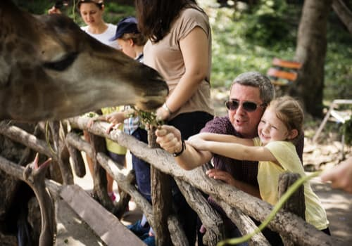 girl and father feeding giraffes at a zoo